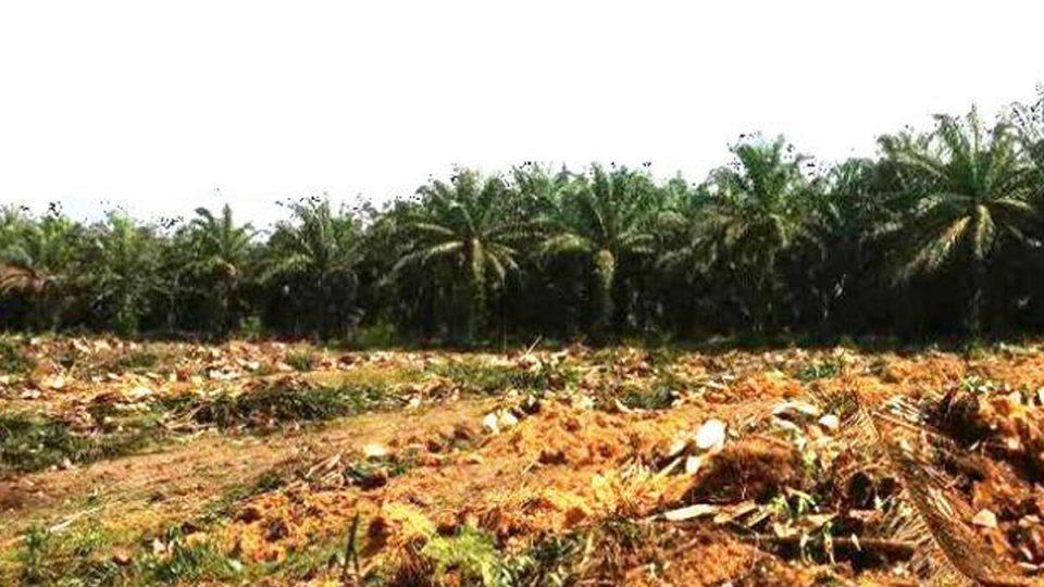 Senin, Polres Bengkulu Utara Panggil Kelompok Replanting Sawit